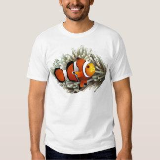 Pescados del payaso remeras
