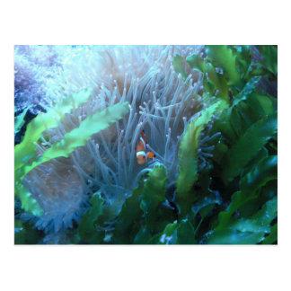 Pescados del payaso tarjetas postales