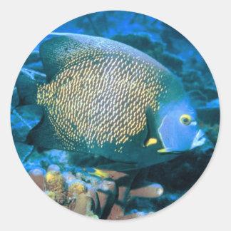 Pescados del Pomacanthus Etiqueta Redonda