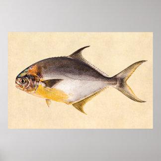 Pescados del pompano del vintage - espacio en blan póster