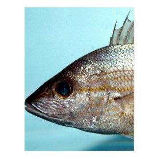Pescados del ronco tarjetas postales