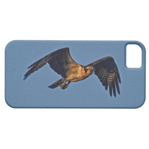 Pescados Eagle de Osprey que vuela en la puesta iPhone 5 Carcasas