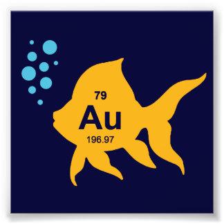 Pescados elementales del oro de la tabla periódica impresion fotografica