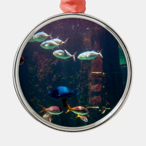 Pescados en acuario ornatos
