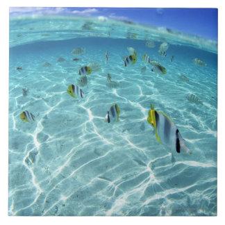 Pescados en el mar 3 azulejo cuadrado grande