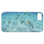Pescados en el mar 3 iPhone 5 Case-Mate funda