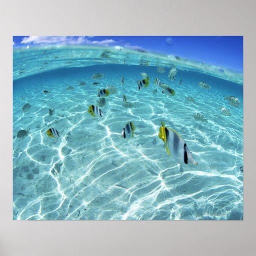 Pescados en el mar 3 poster