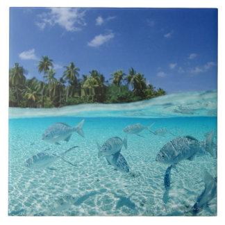 Pescados en el mar azulejo cuadrado grande