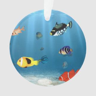 Pescados en el océano