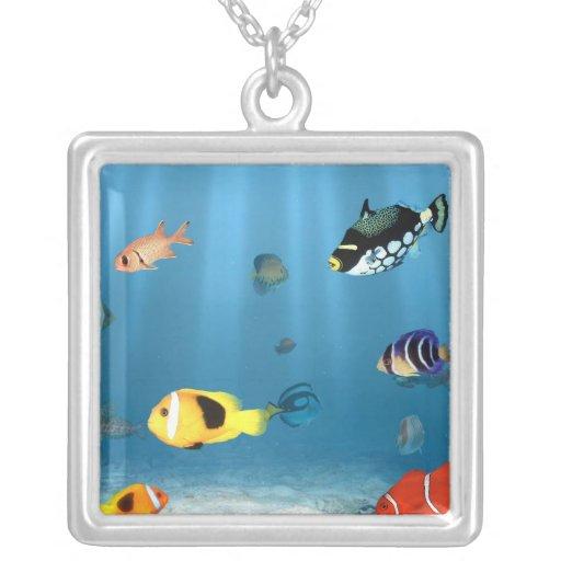 Pescados en el océano colgante cuadrado
