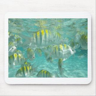 Pescados en Jamaica Tapete De Ratón