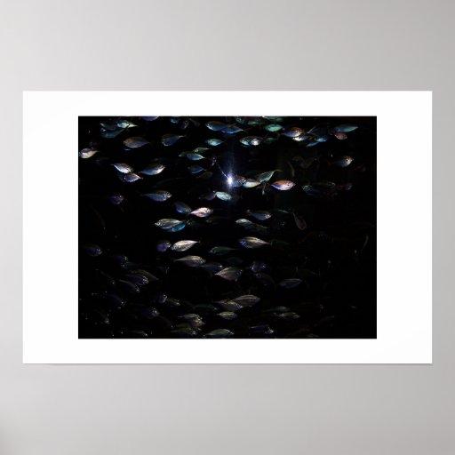 Pescados en oscuridad impresiones