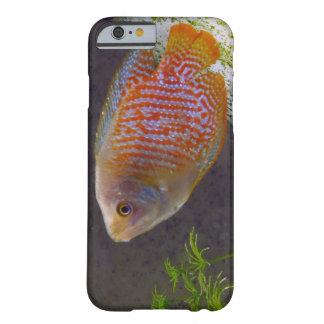 Pescados enanos del Osphromemus gorami Funda De iPhone 6 Barely There