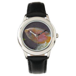 Pescados enanos del Osphromemus gorami Reloj