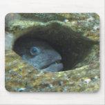 Pescados enfadados tapete de ratón