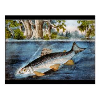 Pescados enganchados postales