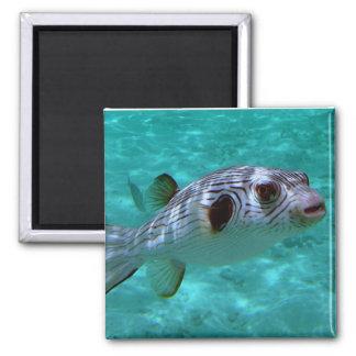 pescados Estrecho-alineados del fumador Imán De Nevera