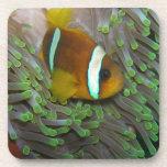 Pescados exóticos del payaso posavasos