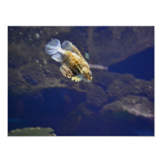 pescados exóticos impresiones
