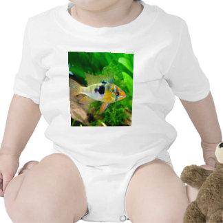 Pescados exóticos trajes de bebé