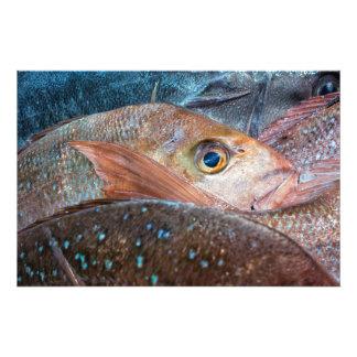 Pescados frescos en un mercado fotografia