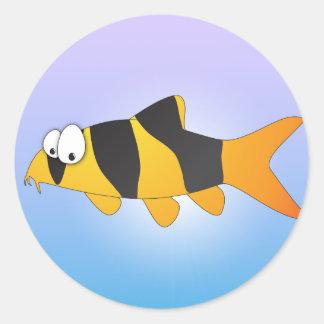 Pescados frescos - loach del payaso pegatina redonda