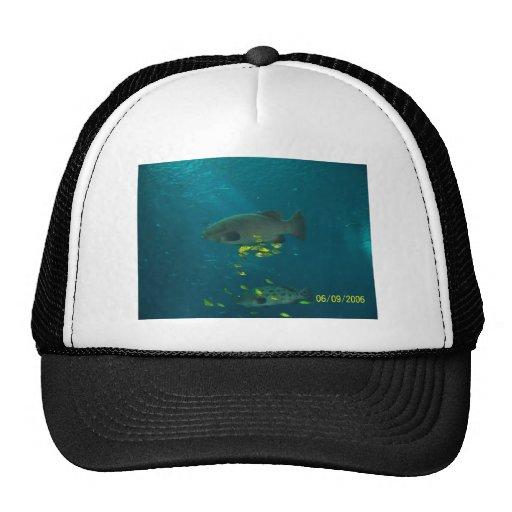 Pescados grandes gorras de camionero