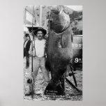 Pescados grandes reales, 1900s tempranos poster