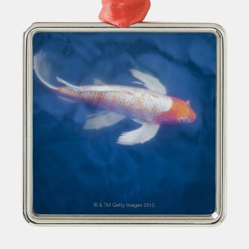 Pescados japoneses del koi en la charca, opinión d ornamentos de reyes magos