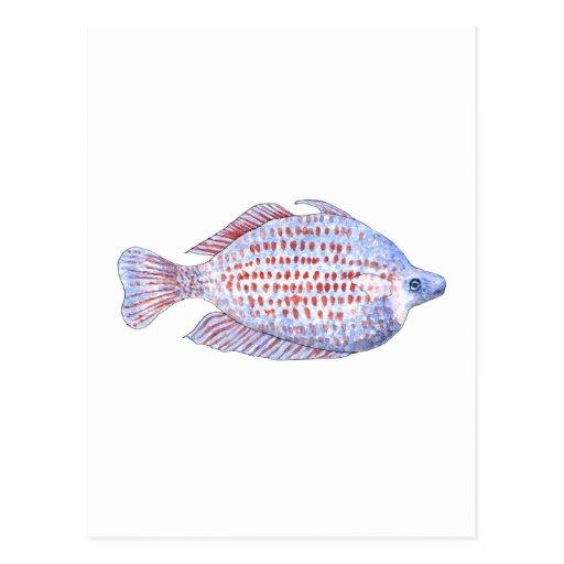 Pescados. Línea roja Rainbowfish. Postal