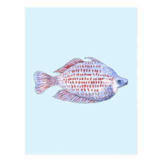 Pescados. Línea roja Rainbowfish. Postales