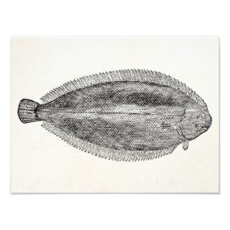 Pescados lisos europeos del vintage únicos - cojinete