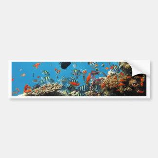 Pescados Naturescape del arrecife de coral Etiqueta De Parachoque
