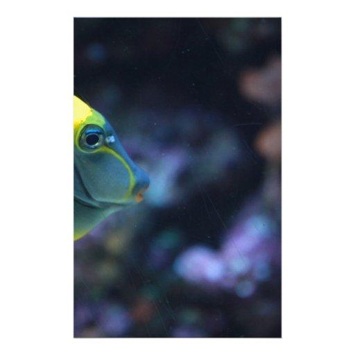 pescados papelería