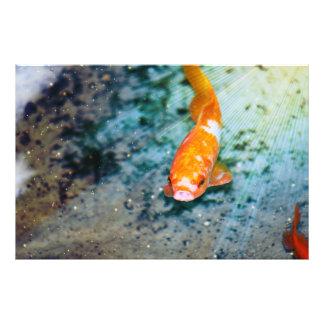 Pescados Fotos