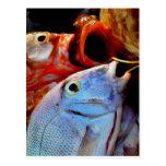 pescados postal