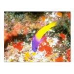 Pescados púrpuras y amarillos postales