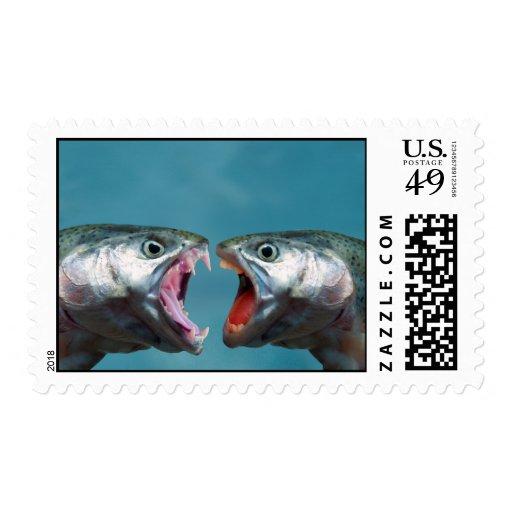 Pescados que gritan en uno a en un partido envio