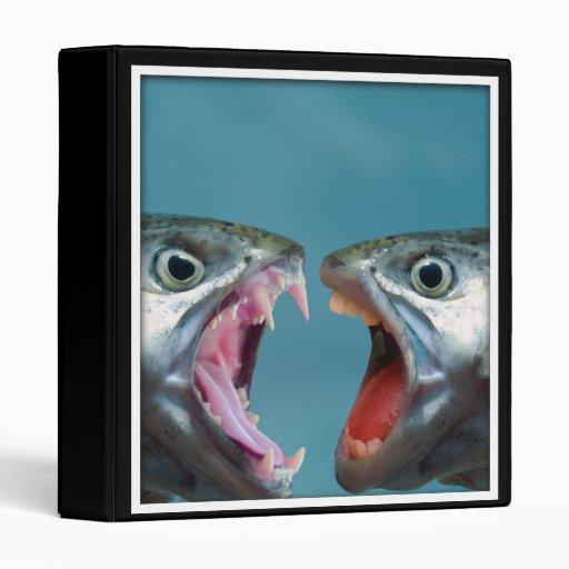 """Pescados que gritan en uno a en un partido gritado carpeta 1"""""""