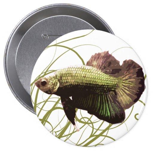 Pescados que luchan siameses de Betta del oro Pins