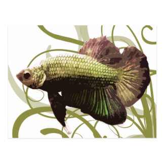 Pescados que luchan siameses de Betta del oro Postal