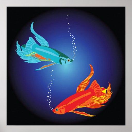 Pescados que luchan siameses posters