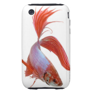 Pescados que luchan siameses (splendens de Betta) iPhone 3 Tough Protectores