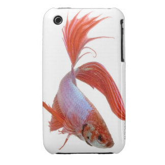 Pescados que luchan siameses (splendens de Betta) iPhone 3 Case-Mate Cárcasa