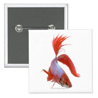 Pescados que luchan siameses (splendens de Betta) Pin Cuadrada 5 Cm