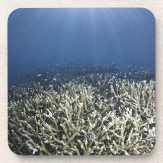 Pescados que nadan sobre el filón muerto posavasos de bebida
