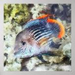 Pescados - Rainbowfish Poster