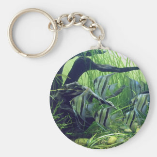 Pescados rayados del acuario