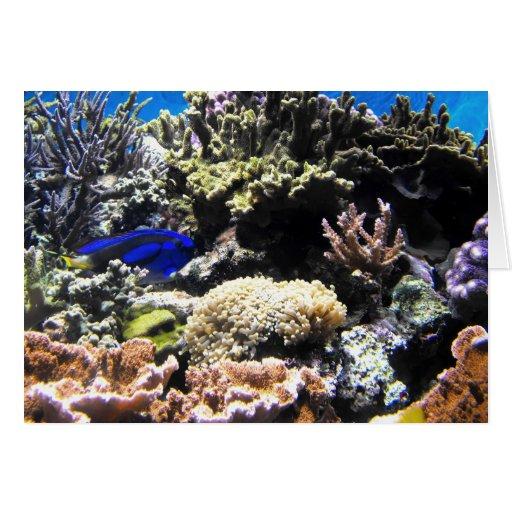 Pescados reales de Tang entre los corales Felicitacion