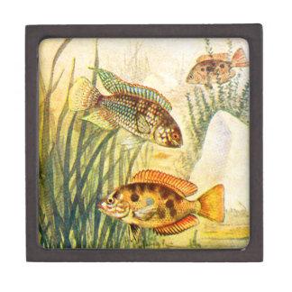 Pescados restaurados vintage caja de joyas de calidad